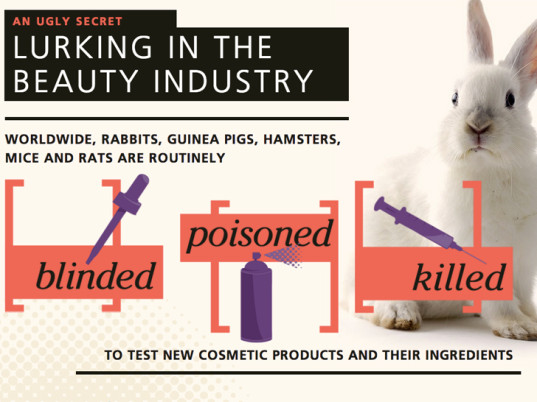 Ethical and Scientific Considerations Regarding Animal Testing and Research